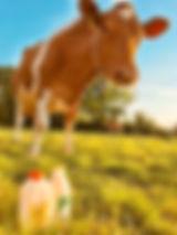 Hinxden Cow.jpg