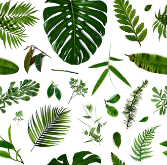 パターンの葉