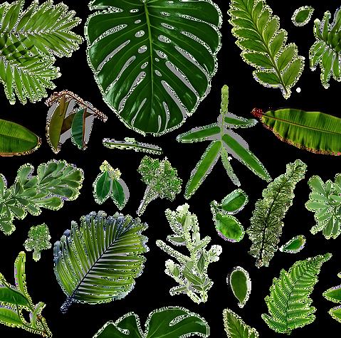 Les feuilles Motif
