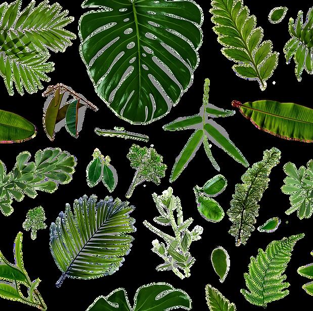 Het patroon van bladeren