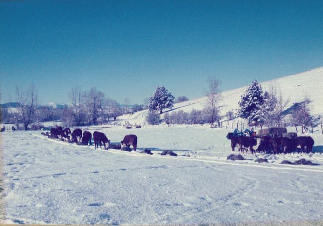 Winter Feeding.png