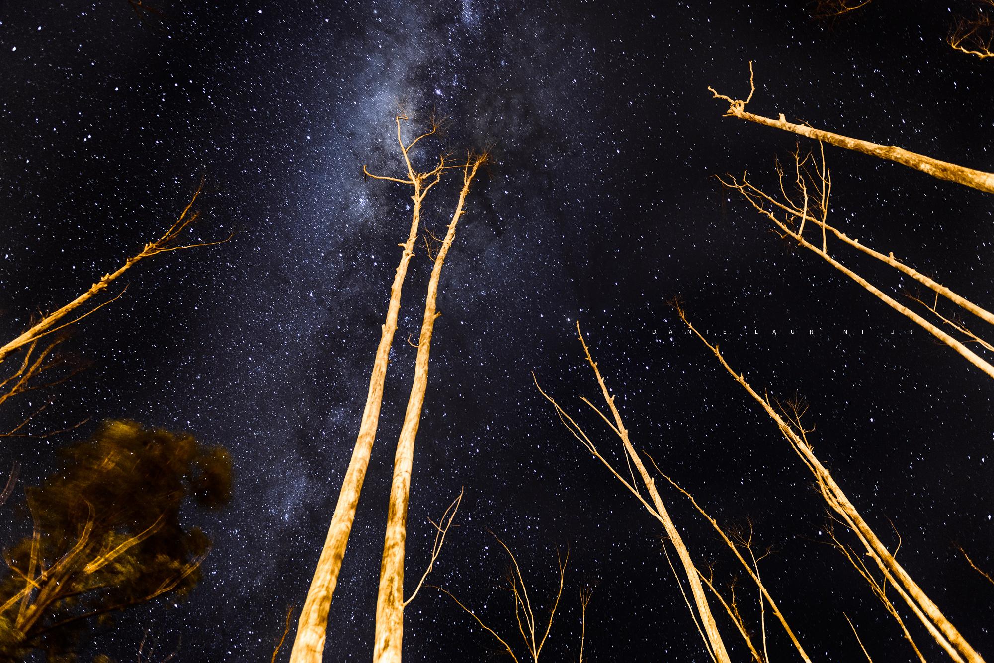 Fotosíntese estrelar