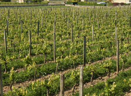 Chateau Bernateau - Saint Emilion - a gem of family owned vineyards