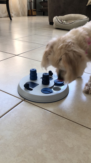 Debra's Dog Den - Physical & Mental Stimulation