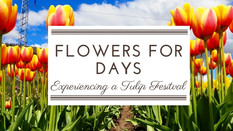 Spring Colours: Getting Lost at the Tulip Festival
