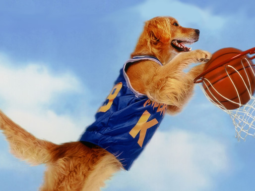 OP-ED from the kid who got cut from his varsity basketball team to make room for a golden retriever