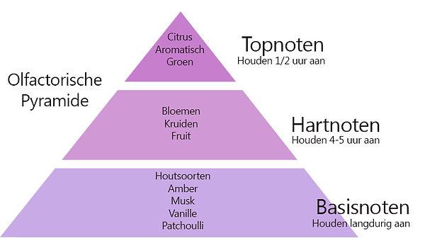 Olfactorische_pyramide.jpg