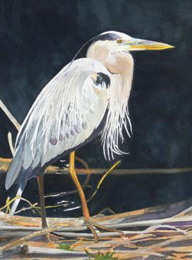 Blue Heron of Bear Creek