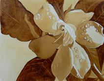Gardenia in Coffee