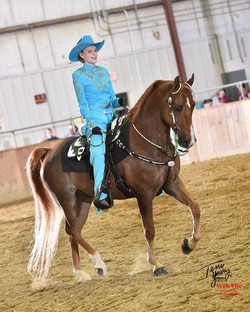 summercamps, horseback riding lesson
