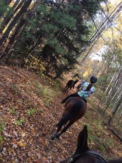 show horses, nh, mass, training