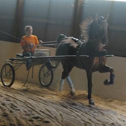 mass, nh, horseback riding lessons