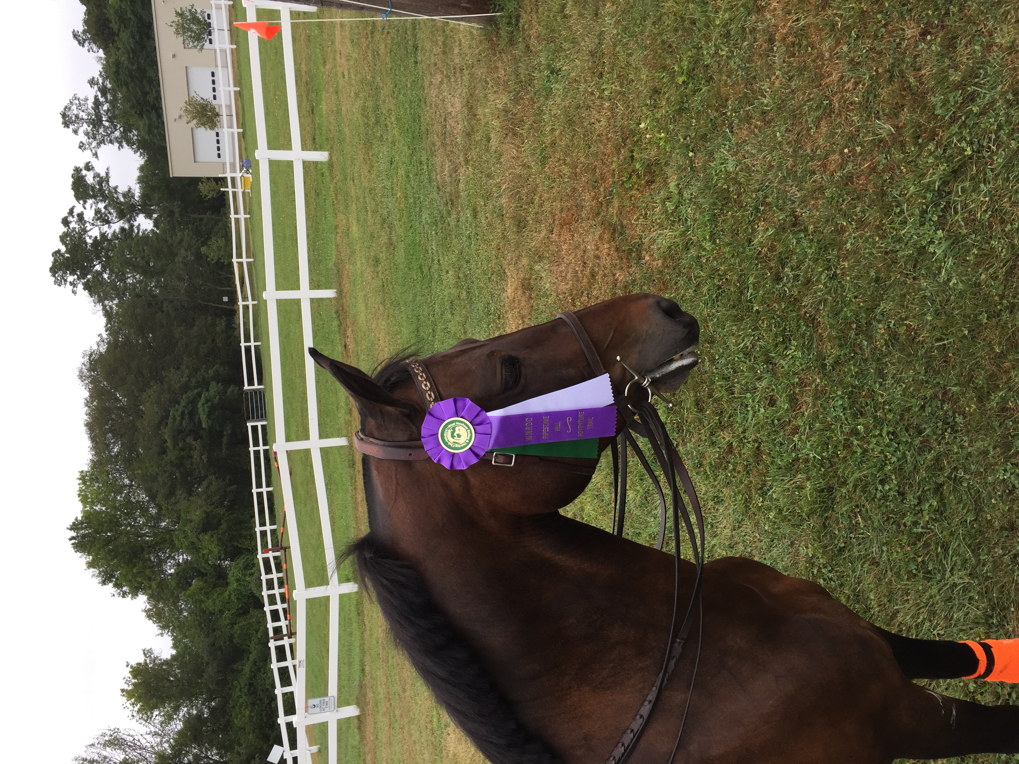 lessons, horsebackriding, training