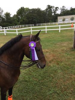 lessons, horsebackriding, training