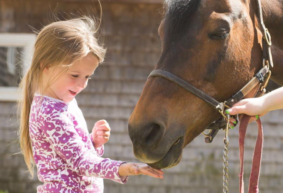 morganhorse, horseback, boarding