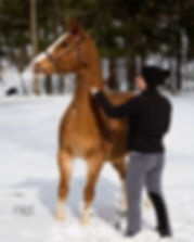 training, horseback riding lessons