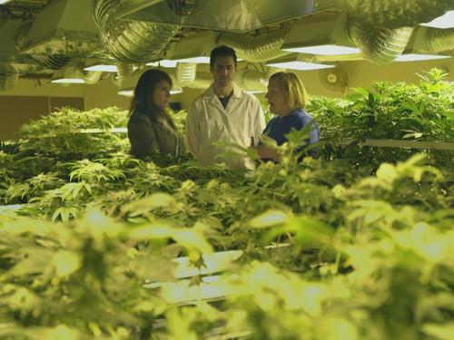映画de言いたい放題vol1. ラテンな国と医療大麻のお話