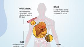 Como age no corpo a gordura trans