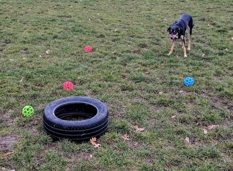Canine Enrichment...