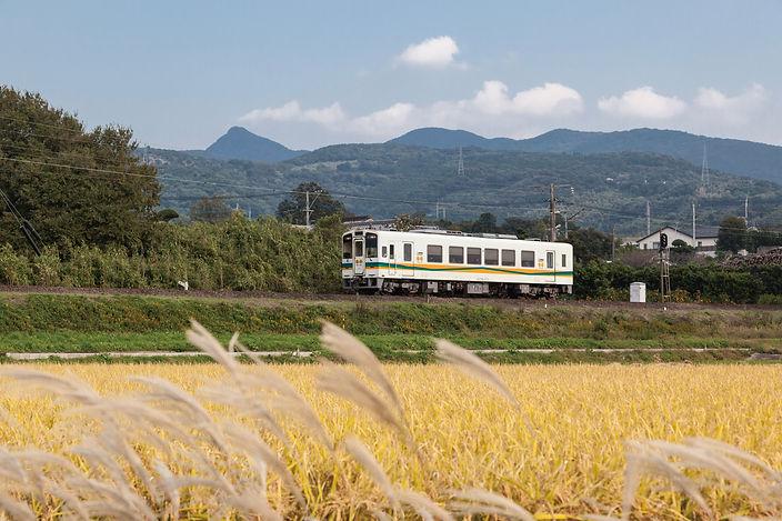 一般列車 田んぼとすすき.jpg