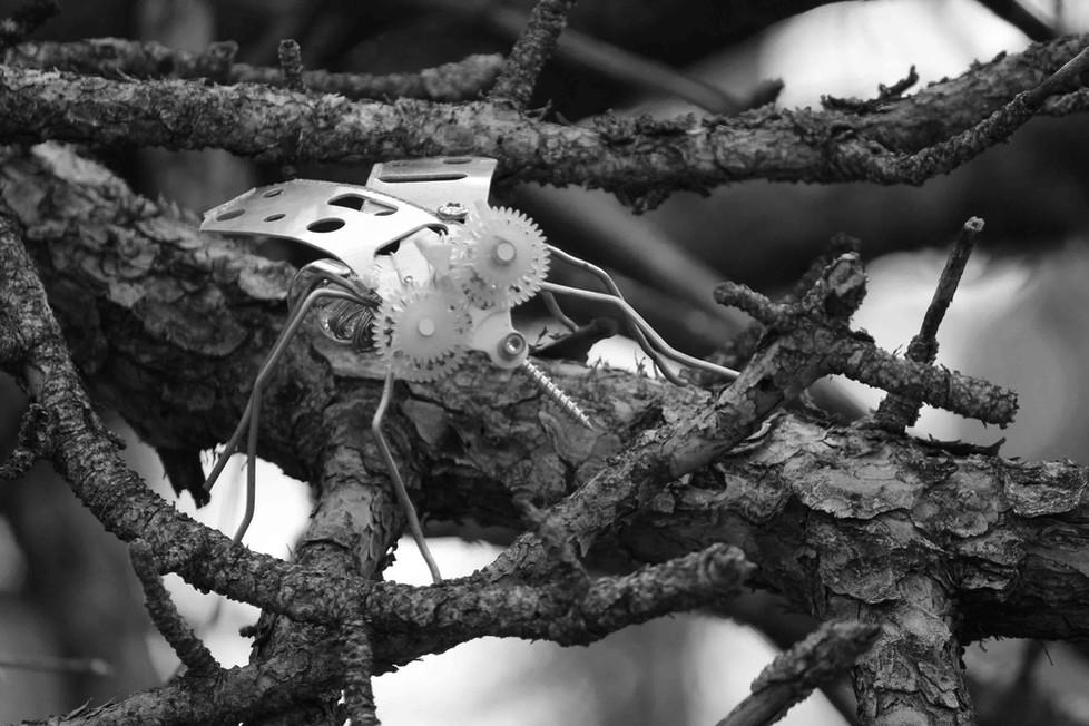 Moustique en récup dans des branches d'arbre