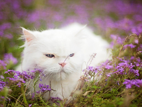 """I believe cats are spirits come to earth. A cat, I am convinced, can walk on a cloud without f"