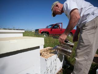 Hive Management