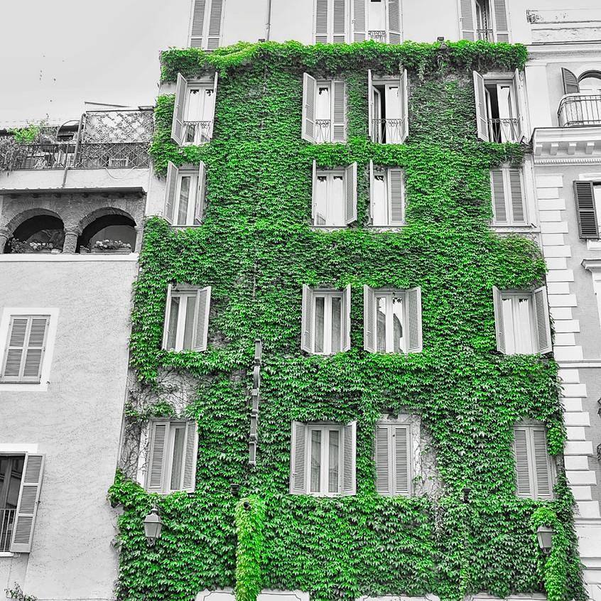 Green walls in the hidden piazas of Rome