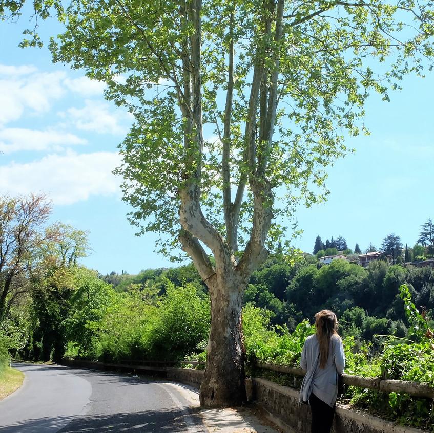 The Greenery of Zagarolo