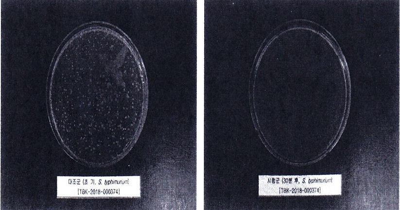 Salmonella Typhimurium.jpg