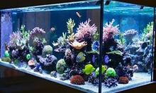 fish tank disinfection.jpg