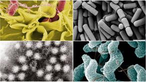 Spize food poisoning: 6 types of pathogens found