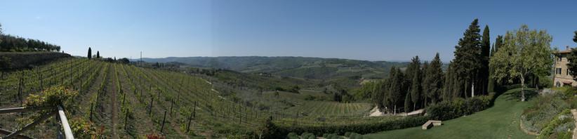 Vinyards in Piemonte