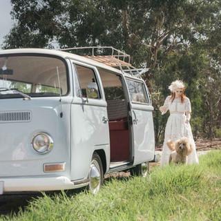 A1 Wash & Grooming   Pet Wedding Grooming   Kombi & Pet Shoot