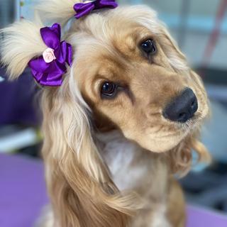 A1 Wash & Grooming   Pet Wedding Grooming   Puppy Shot