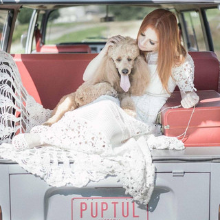 A1 Wash & Grooming   Pet Wedding Grooming   Bride & Puppy Shoot With Kombi