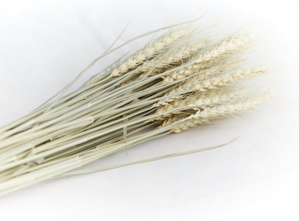 Wearible Wheatbags New Zealand 100% Natural