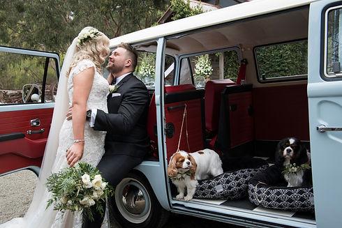 A1 Wash & Grooming   Wedding Kombi Hire & Pet Grooming