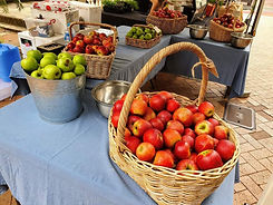Stanthorpe Apples Tweed Farmers Market Stallholder