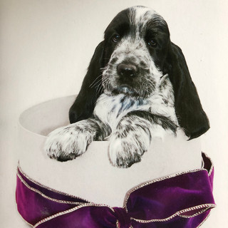 A1 Wash & Grooming   Pet Wedding Grooming   Puppy Shoot