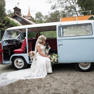 A1 Wash & Grooming   Pet Wedding Grooming   Bride & Dog Shoot With Kombi