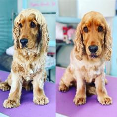A1 Wash & Grooming   Pet Grooming