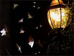 108785209-qui4gml9-moths1.jpg