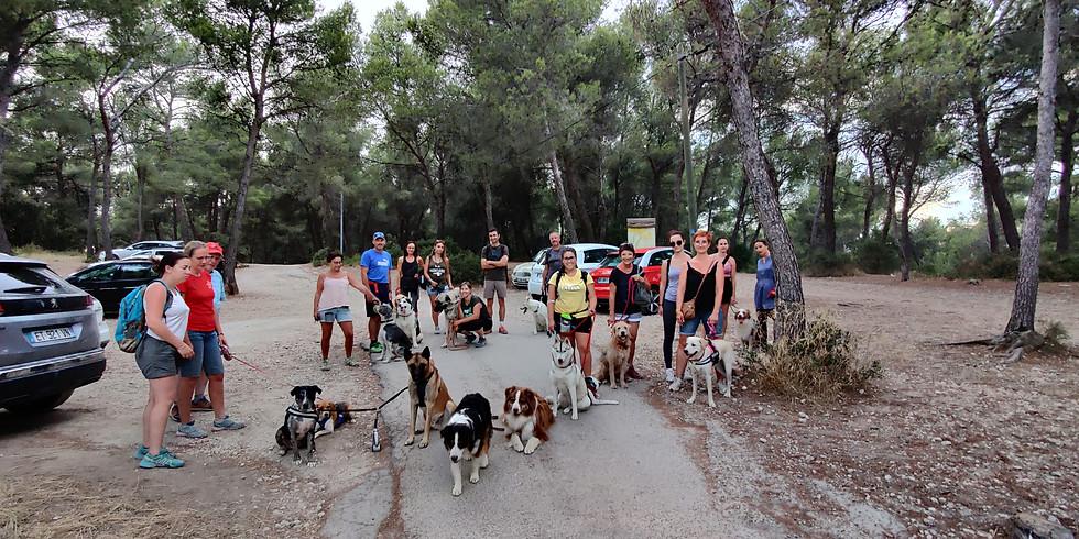 Cani-randonnée au bord de la Durance