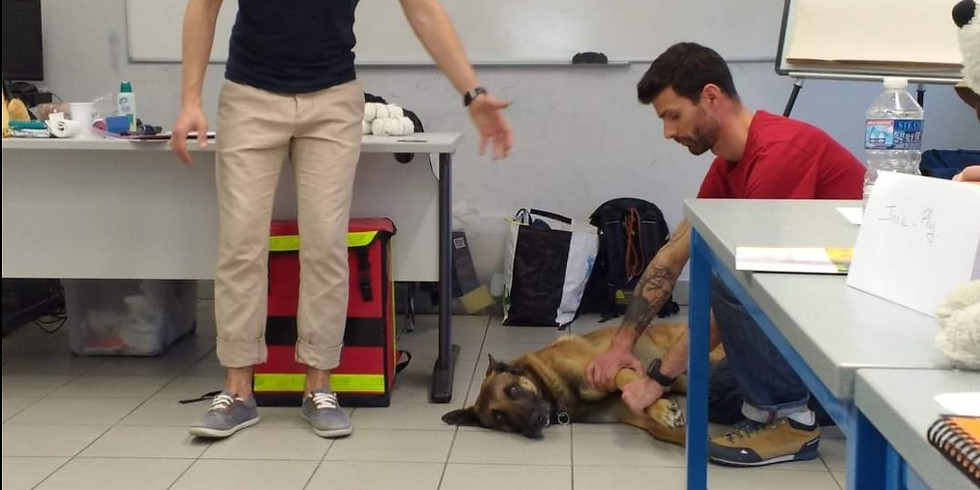Formation 1ers secours canin
