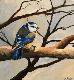 Blue Bird Sitting Pretty