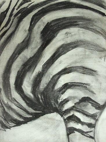 zebra houtskool 031_edited_edited.jpg