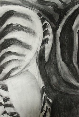 zebra houtskool 029_edited_edited.JPG