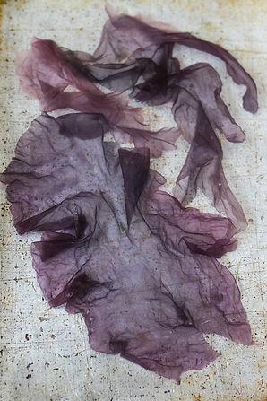 w-gezouten zeewier jpg-3562.jpg