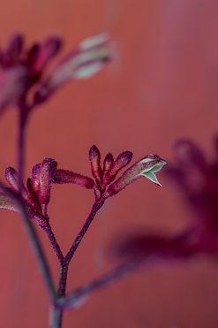 donkere bloemen serie jpg-249.jpg